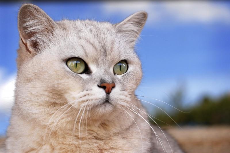 Allergia al pelo del gatto cura sempre pi vicina - L allergia porta sonnolenza ...