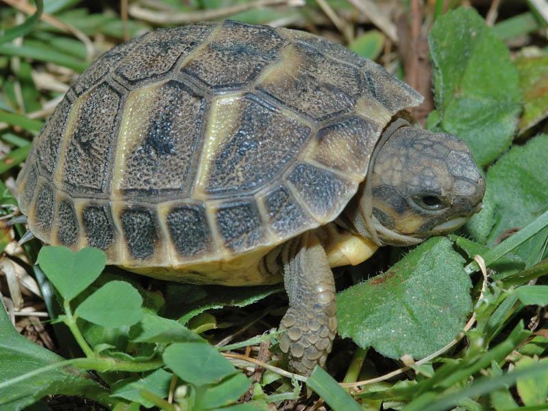 Disponibilit di farmaci veterinari per i nuovi animali da for Termoriscaldatore per tartarughe
