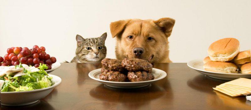 cane-e-gatto-che-mangiano