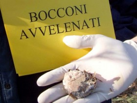 bocconi-avvelenati-esche
